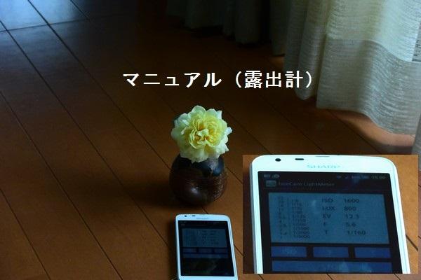 __DSC_6231.jpg